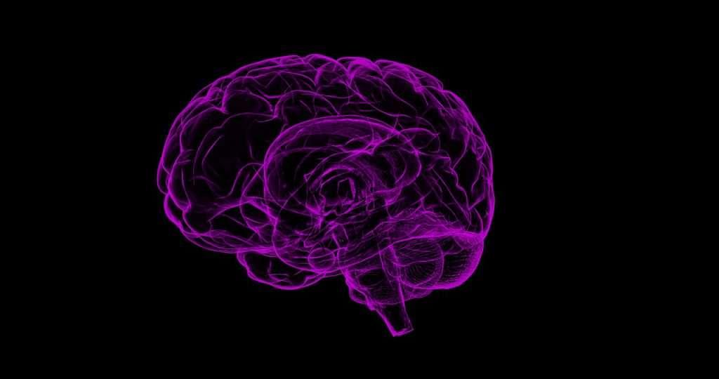 ¿Cómo es el cerebro?