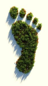 alimentación y sostenibilidad