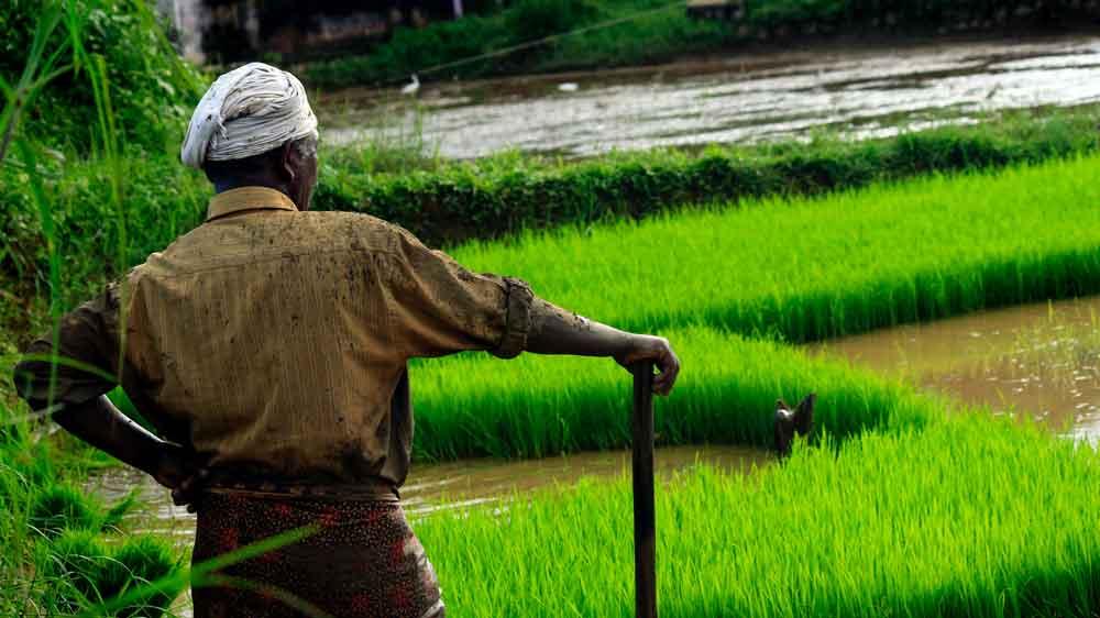 Los desafíos de la alimentación:  desarrollo sostenible y Hambre Cero