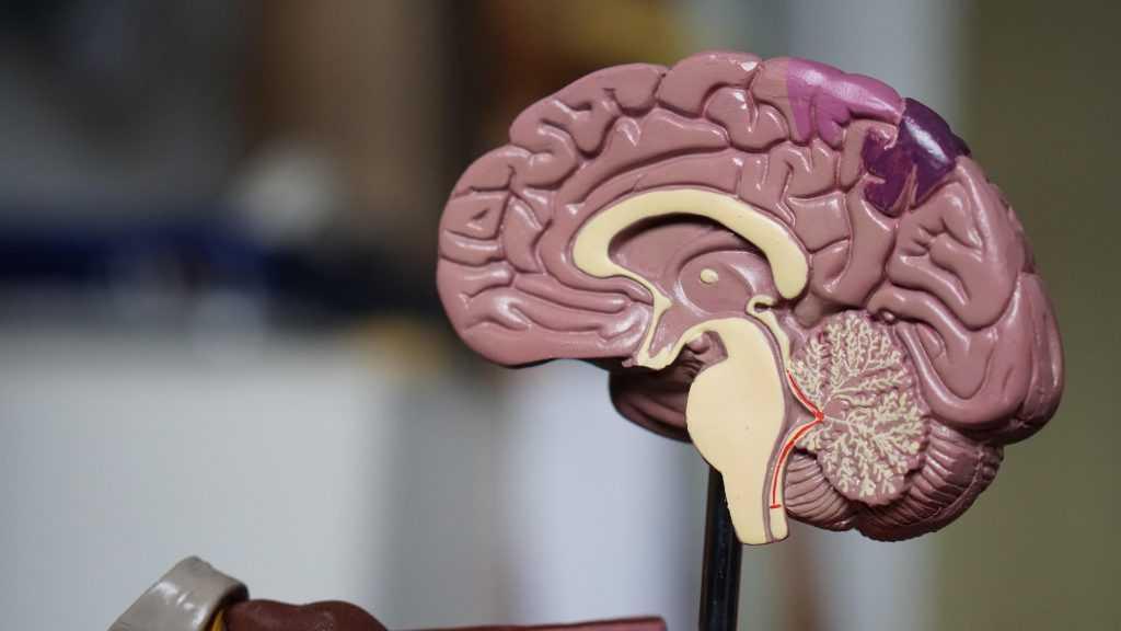 Oportunidades laborales Neuropsicología