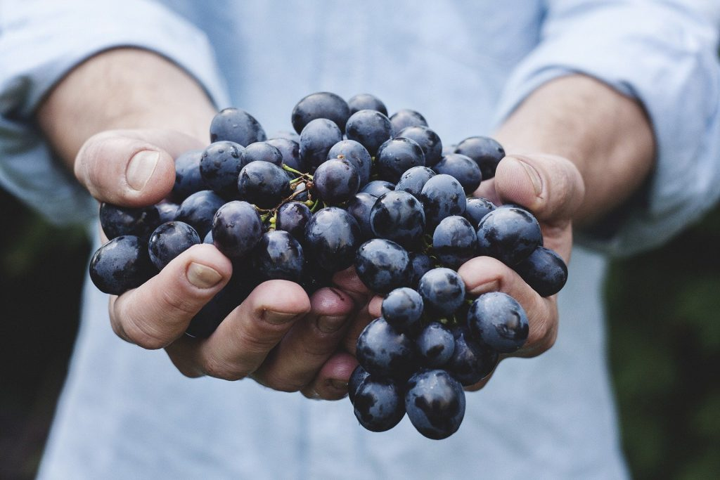 nsalada, Frutas, Bayas, Saludable, Vitaminas, Fresco